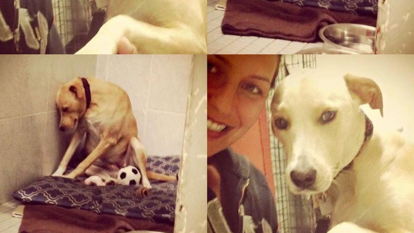 petition update this dog is so heartbroken and sad she