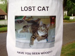 lost-cat-250x187.jpg (250×187)