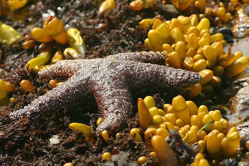 Giant Marine Reserves Gain Momentum: Do We Dare Be Hopeful?