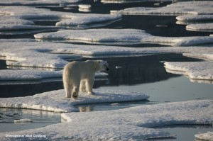 Polar bears and Arctic sea ice copyright Greenpeace/Nick Cobbing